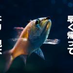 6月22日金曜ロードショー放送のファインディング・ドリーあらすじ紹介!