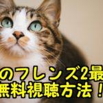 けものフレンズ2期アニメ動画の最新話を無料見逃し配信!アニポでフル視聴できる?